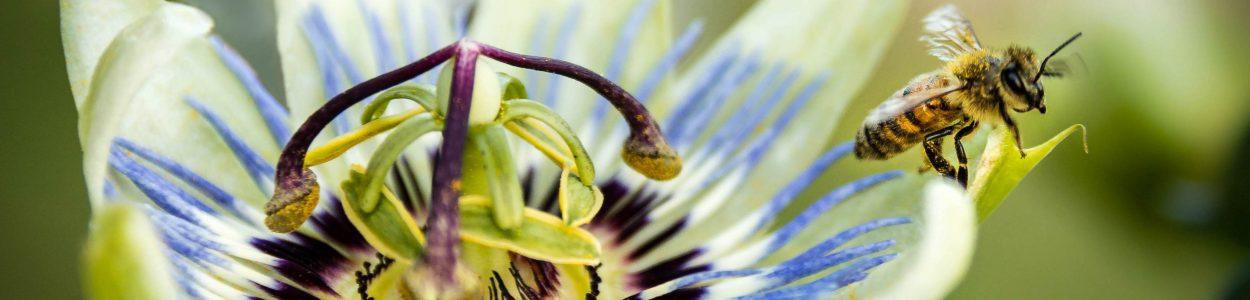 plantes phytothérapie